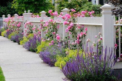 Bloem En Tuin : Bloementuin koele kleuren tuin & terras