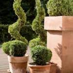 aardewerk plantenbak