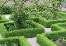 Haag planten wanneer