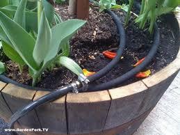 Irrigatie kuipplanten