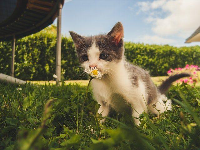 Je Kat In De Tuin Houden Zo Pak Je Dat Aan Tuin Terras